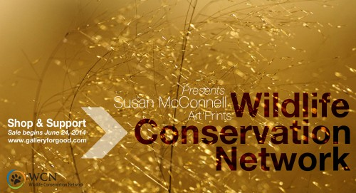 S-WCN-McConnell2